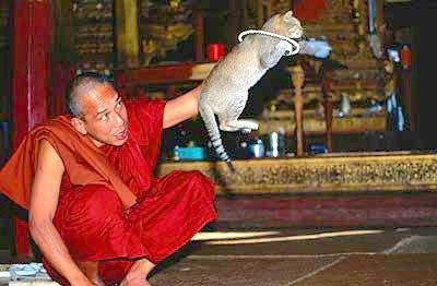 Кошки у озера Инле Мьянма