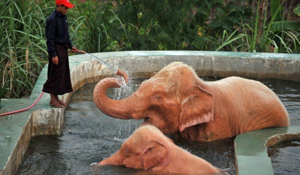 Белые слоны в Нейпьидо