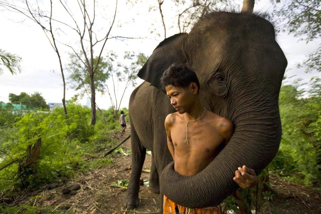 Мьянма слоны